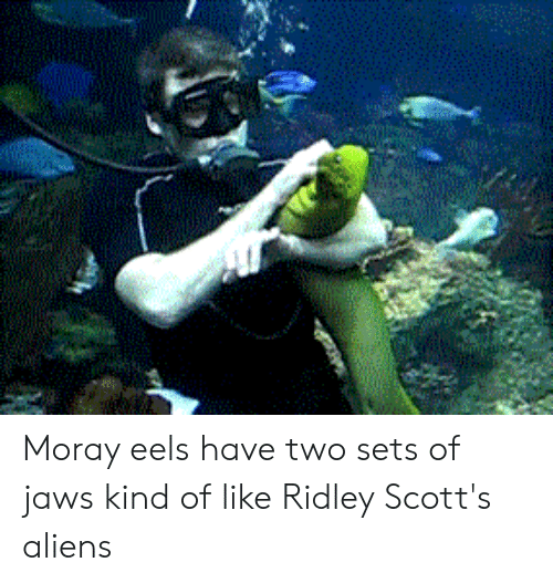 Aliens, Jaws, and Eels: Moray eels have two sets of jaws kind of like Ridley Scott's aliens