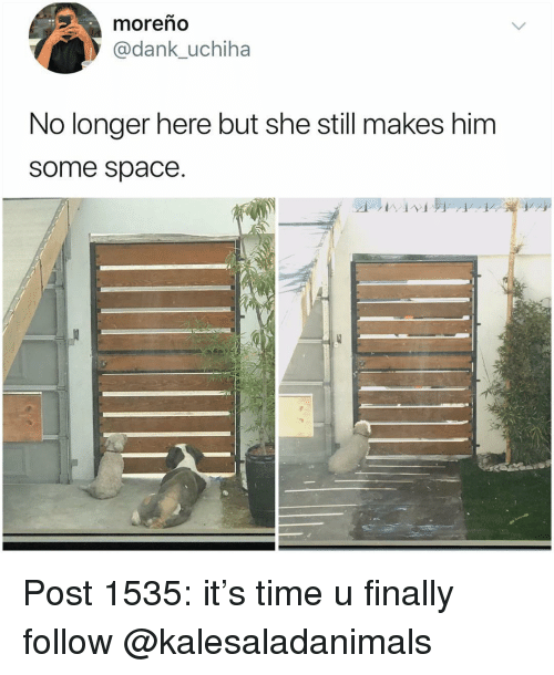 Dank, Memes, and Space: moreno  @dank_uchiha  No longer here but she still makes him  some space. Post 1535: it's time u finally follow @kalesaladanimals