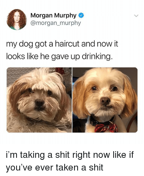 Drinking, Haircut, and Shit: Morgan Murphy  @morgan, murphy  my dog got a haircut and now it  looks like he gave up drinking i'm taking a shit right now like if you've ever taken a shit