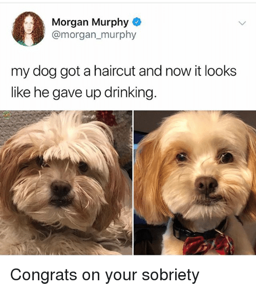 Drinking, Haircut, and Memes: Morgan Murphy  @morgan_murphy  my dog got a haircut and now it looks  like he gave up drinking Congrats on your sobriety