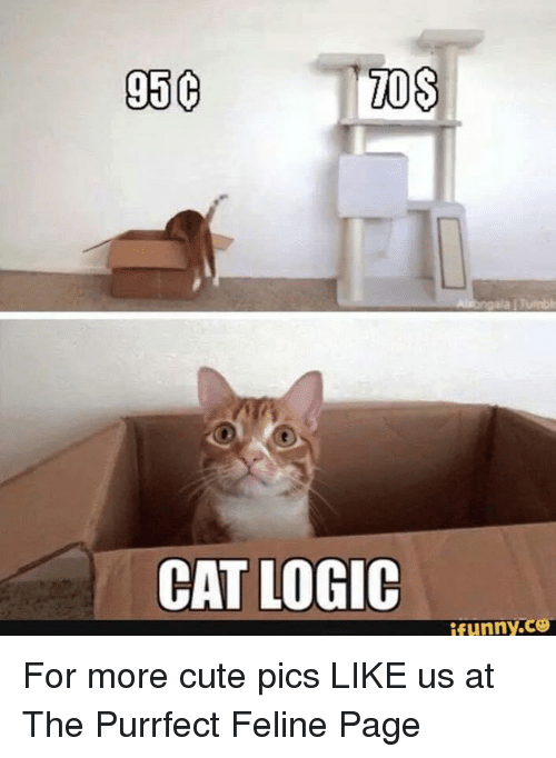 Memes  F F A  And Mos Mos C Cat Logic Funny Co For More Cute