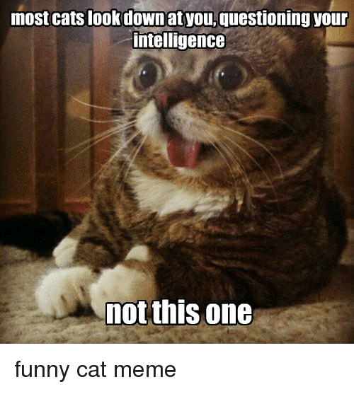 Most Cats Look Downat Youquestioning Your Intelligence Not This One