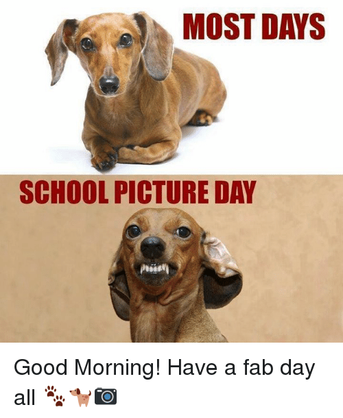 Memes, School, and Good Morning: MOST DAYS  SCHOOL PICTURE DAY Good Morning! Have a fab day all 🐾🐕📷