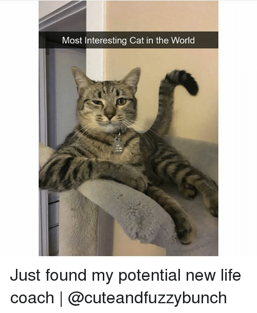 Life, Memes, and World: Most Interesting Cat in the World Just found my potential new life coach | @cuteandfuzzybunch