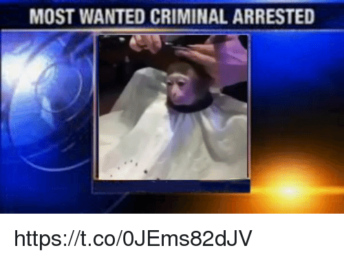 Wanted, Criminal, and Most Wanted: MOST WANTED CRIMINAL ARRESTED https://t.co/0JEms82dJV