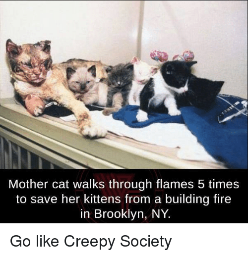 Mother Of Cats Meme