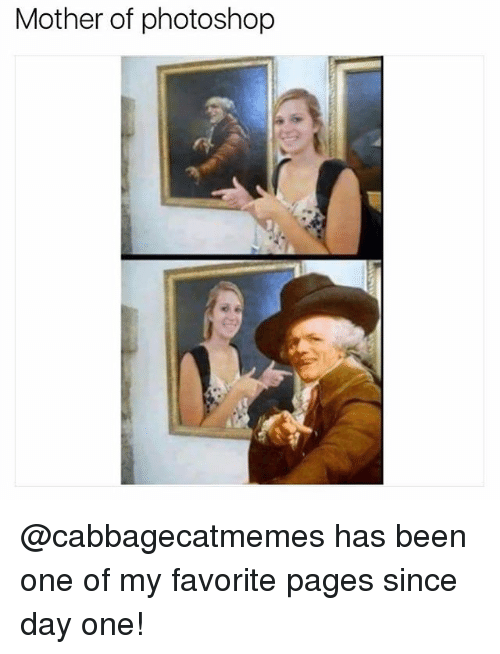 Funny, Meme, and Photoshop: Mother of photoshop @cabbagecatmemes has been one of my favorite pages since day one!