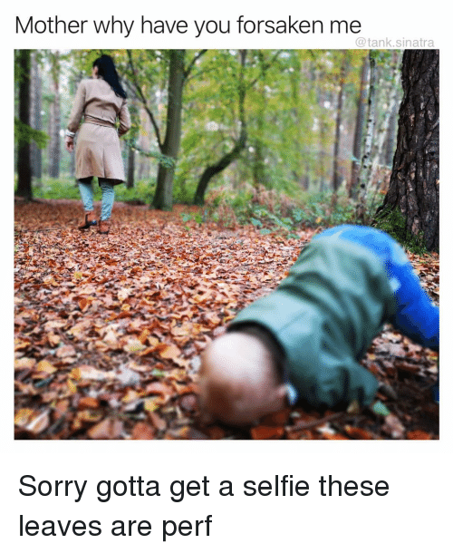 Funny, Selfie, and Sorry: Mother why have you forsaken me  @tank.sinatra Sorry gotta get a selfie these leaves are perf