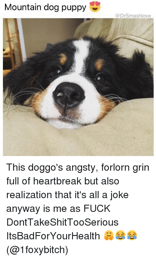 Memes, Fuck, and Puppy: Mountain dog puppy  @DrSmashlove This doggo's angsty, forlorn grin full of heartbreak but also realization that it's all a joke anyway is me as FUCK DontTakeShitTooSerious ItsBadForYourHealth 🤗😂😂 (@1foxybitch)