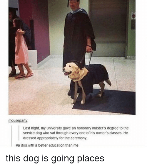 Memes, Masters, and 🤖: mouseparty  Last night, my university gave an honorary master's degree to the  service dog who sat through every one of his owner's classes. He  dressed appropriately for the ceremony.  #a doa with a better education than me this dog is going places