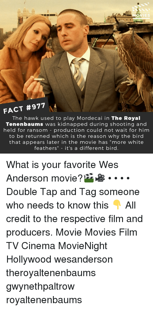 """Memes, Movies, and Movie: MOVIES  FACT #977  The hawk used to play Mordecai in The Royal  Tenenbaums was kidnapped during shooting and  held for ransom -production could not wait for him  to be returned which is the reason why the bird  that appears later in the movie has """"more white  feathers"""" - it's a different bird. What is your favorite Wes Anderson movie?🎬🎥 • • • • Double Tap and Tag someone who needs to know this 👇 All credit to the respective film and producers. Movie Movies Film TV Cinema MovieNight Hollywood wesanderson theroyaltenenbaums gwynethpaltrow royaltenenbaums"""