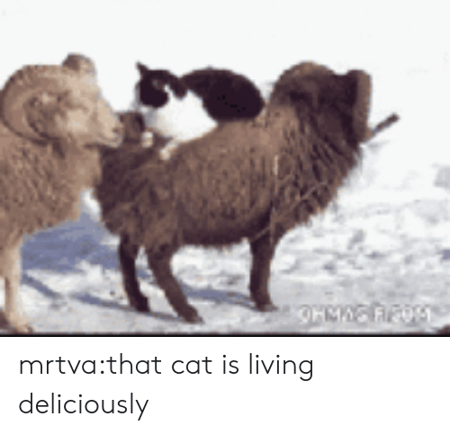 Tumblr, Blog, and Http: mrtva:that cat is living deliciously