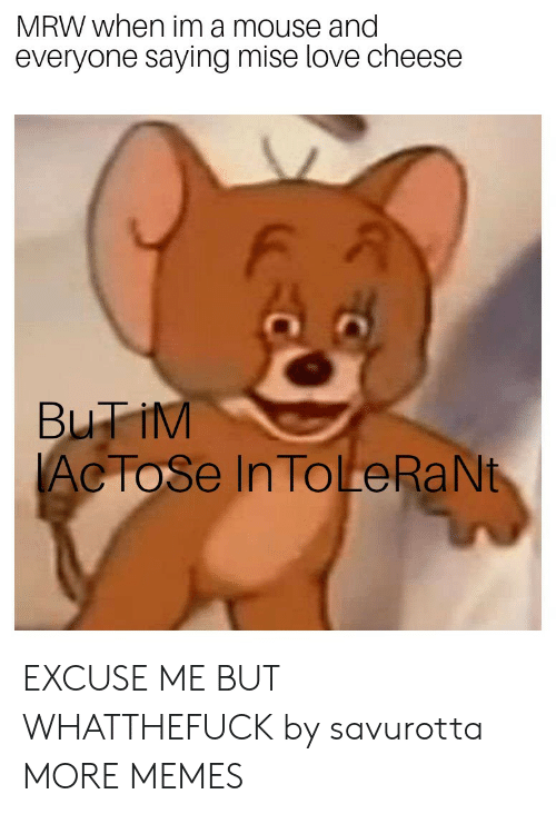 Dank, Love, and Memes: MRW when im a mouse and  everyone saying mise love cheese  F A  Ac ToSe In ToLeRaNt EXCUSE ME BUT WHATTHEFUCK by savurotta MORE MEMES