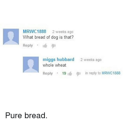 """Funny, Dog, and Bread: MRWC1888 2 weeks ago  What bread of dog is that?  Reply . """"6  miggs hubbard  whole wheat  2 weeks ago  Reply . 19 iéデin reply to M RWC1888 Pure bread."""