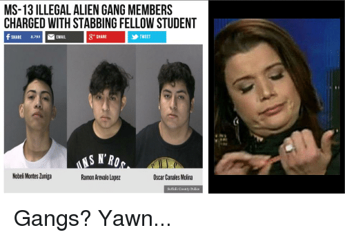Police, Gang, and Alien: MS-13 ILLEGAL ALIEN GANG MEMBERS  CHARGED WITH STABBING FELLOW STUDENT  f SHARE 8793 EMAIL  8+ SHARE  TWEET  SN'RO  Nobeli Montes Zuniga  Ramon Arevalo Lopez  Oscar Canales Molina  Suffolk County Police