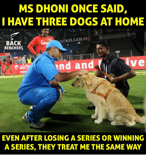 Dogs, Memes, and Home: MS DHONI ONCE SAID,  I HAVE THREE DOGS AT HOME  g3 KILLER  BACK  BENCHERS  airte  nd and  ve  mon  ent Ultr  ent jUltr  EVEN AFTER LOSING A SERIES OR WINNING  A SERIES, THEY TREAT ME THE SAME WAY