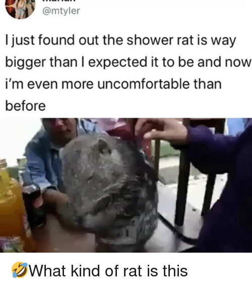 Memes, Shower, and 🤖: @mtyler  l just found out the shower rat is way  bigger than I expected it to be and now  i'm even more uncomfortable than  before 🤣What kind of rat is this