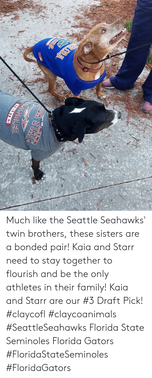 Family, Memes, and Seattle Seahawks: Much like the Seattle Seahawks' twin brothers, these sisters are a bonded pair! Kaia and Starr need to stay together to flourish and be the only athletes in their family! Kaia and Starr are our #3 Draft Pick! #claycofl #claycoanimals #SeattleSeahawks Florida State Seminoles Florida Gators #FloridaStateSeminoles #FloridaGators