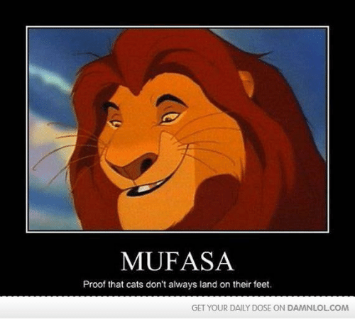 mufasa proof that cats dont always land on their feet 16897725 ✅ 25 best memes about mufasa mufasa memes