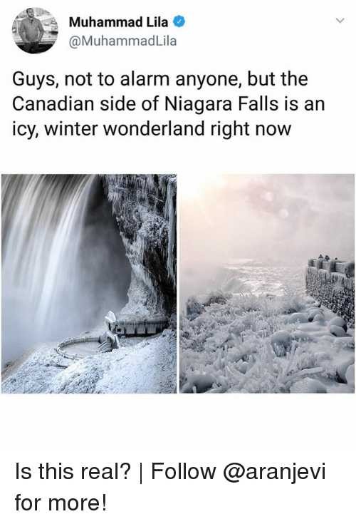 Memes, Winter, and Alarm: Muhammad Lila  @MuhammadLila  Guys, not to alarm anyone, but the  Canadian side of Niagara Falls is an  icy, winter wonderland right now Is this real? | Follow @aranjevi for more!