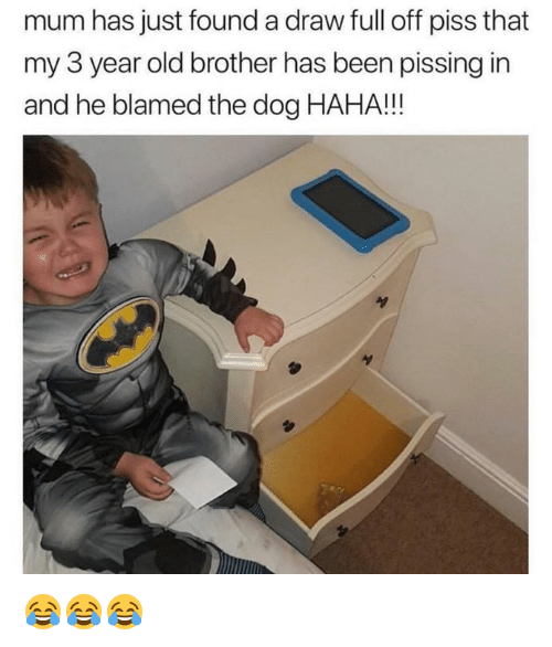 Old, Been, and Haha: mum has just found a draw full off piss that  my 3 year old brother has been pissing in  and he blamed the dog HAHA!! 😂😂😂