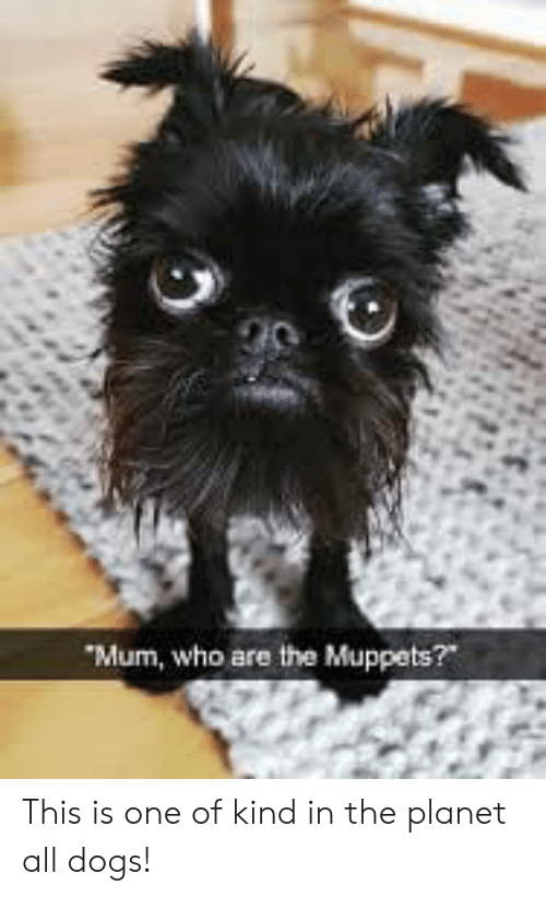 """Dogs, The Muppets, and The Muppets: Mum, who are the Muppets?"""" This is one of kind in the planet all dogs!"""
