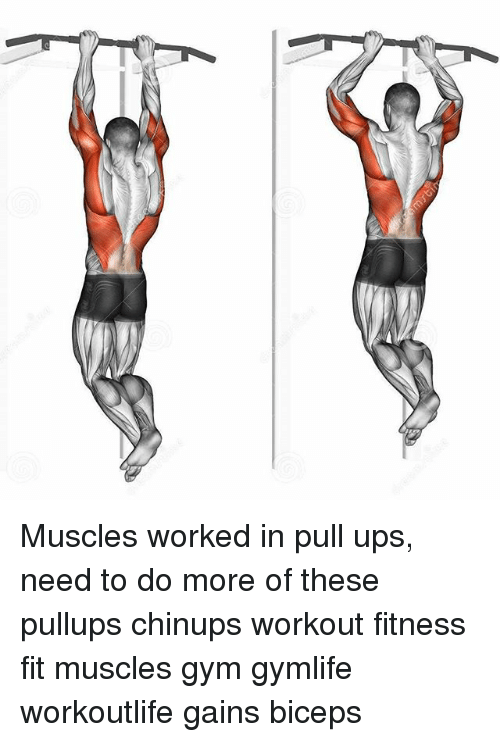 Muscles Worked In Pull Ups Need To Do More Of These Pullups Chinups