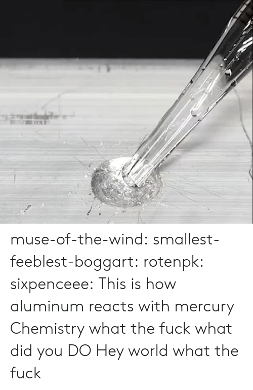 Target, Tumblr, and Blog: muse-of-the-wind:  smallest-feeblest-boggart: rotenpk:  sixpenceee: This is how aluminum reacts with mercury  Chemistry what the fuck  what did you DO  Hey world what the fuck