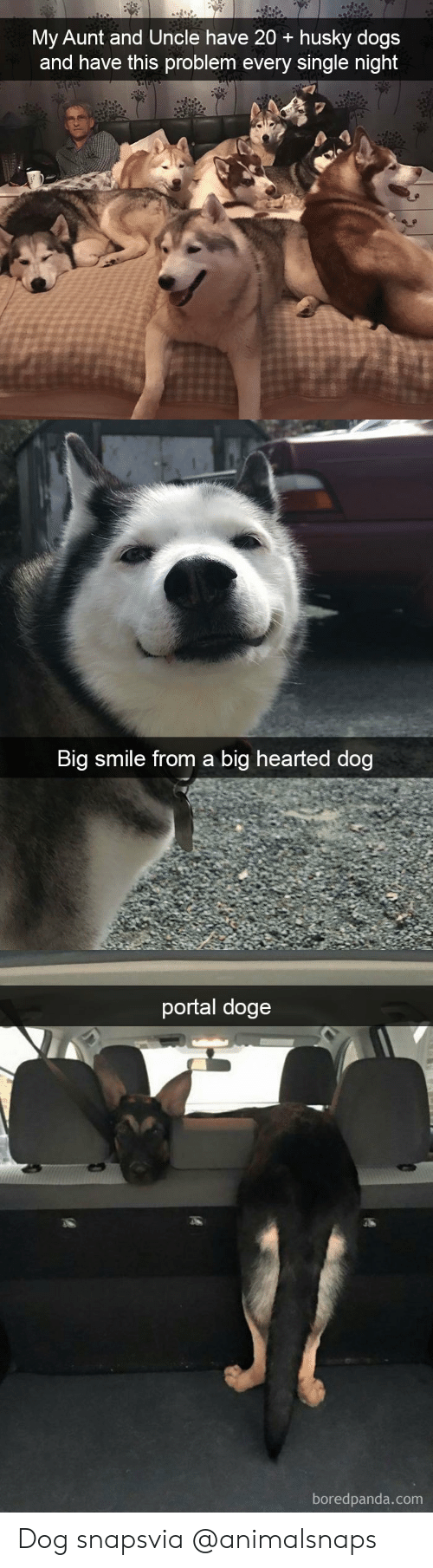 Doge, Dogs, and Target: My Aunt and Uncle have 20 + husky dogs  and have this problem every single night   Big smile from a big hearted dog   portal doge  boredpanda.com Dog snapsvia @animalsnaps