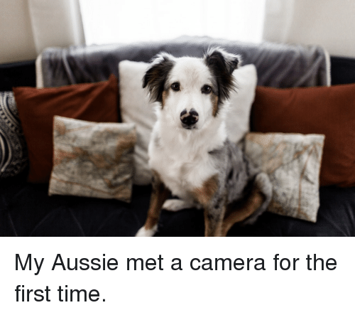 Wtf, Camera, and Time: My Aussie met a camera for the first time.