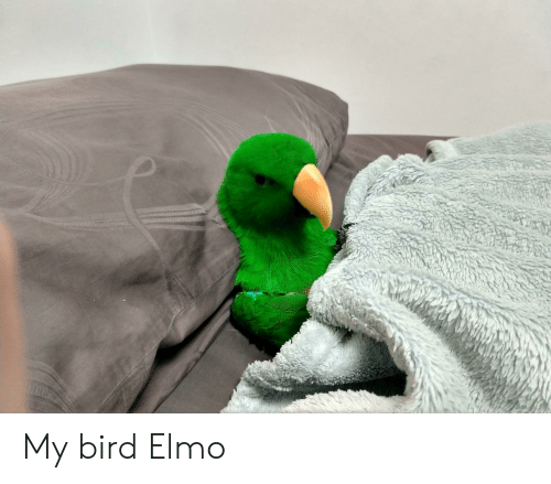 My Bird Elmo Elmo Meme On Me Me