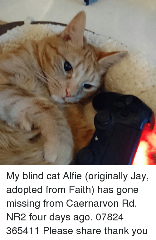 My Blind Cat Alfie Originally Jay Adopted From Faith Has