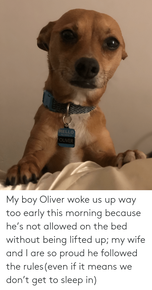 Wife, Proud, and Sleep: My boy Oliver woke us up way too early this morning because he's not allowed on the bed without being lifted up; my wife and I are so proud he followed the rules(even if it means we don't get to sleep in)