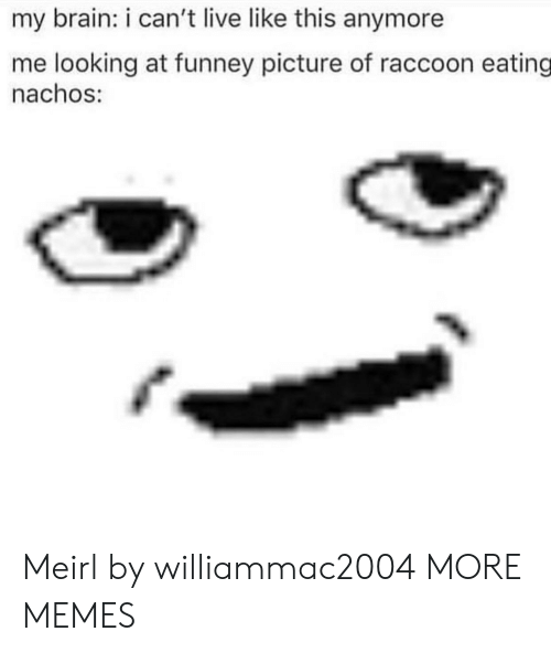Dank, Memes, and Target: my brain: i can't live like this anymore  me looking at funney picture of raccoon eating  nachos: Meirl by williammac2004 MORE MEMES