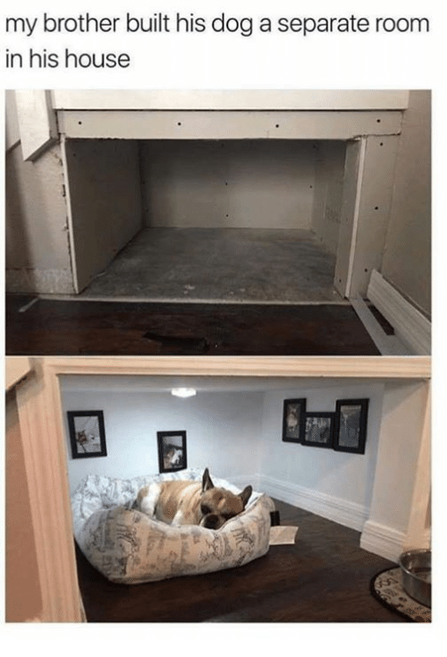 Dank, House, and 🤖: my brother built his dog a separate roonm  in his house