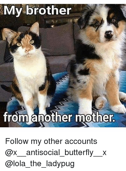 Memes, Butterfly, and Antisocial: My brother  from another mother. Follow my other accounts @x__antisocial_butterfly__x @lola_the_ladypug