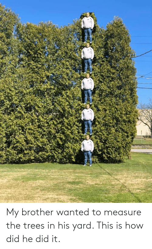 Trees, How, and Brother: My brother wanted to measure the trees in his yard. This is how did he did it.