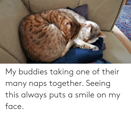 Smile, One, and Face: My buddies taking one of their many naps together. Seeing this always puts a smile on my face.