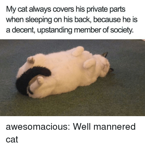 Tumblr, Blog, and Covers: My cat always covers his private parts  when sleeping on his back, because he is  a decent, upstanding member of society. awesomacious:  Well mannered cat