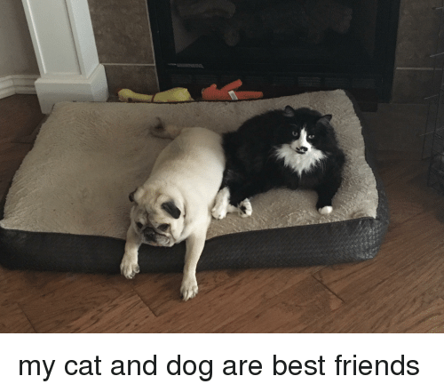 Friends, Best, and Best Friends