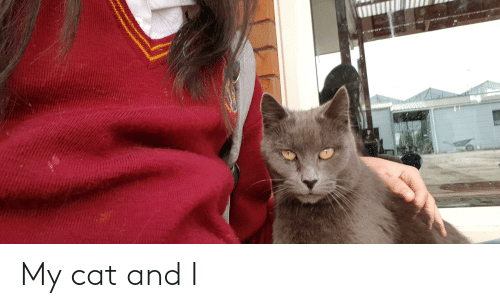 Cat, And, and My Cat: My cat and I