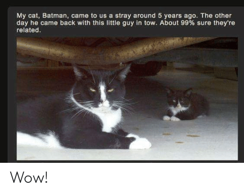 Batman, Memes, and Wow: My cat, Batman, came to us a stray around 5 years ago. The other  day he came back with this little guy in tow. About 99 % sure they're  related. Wow!