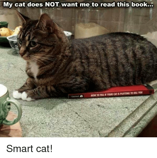 Grumpy Cat, Cat, and Smart: My cat does NOT want me to read this book... Smart cat!