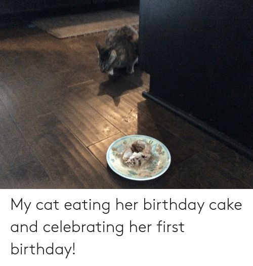 Birthday Cake And Her My Cat Eating Celebrating