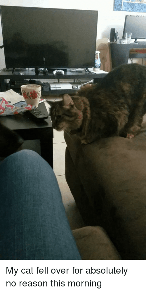 Rosie, Reason, and Cat: My cat fell over for absolutely no reason this morning