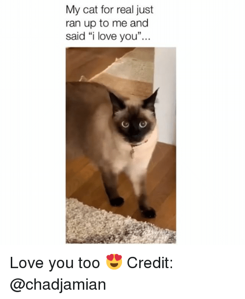 "Love, Memes, and I Love You: My cat for real just  ran up to me and  said ""i love you"" Love you too 😍 Credit: @chadjamian"