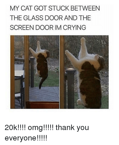 Memes, 🤖, and Screening: MY CAT GOT STUCK BETWEEN  THE GLASS DOOR AND THE  SCREEN DOOR IM CRYING 20k!!!! omg!!!!! thank you everyone!!!!!