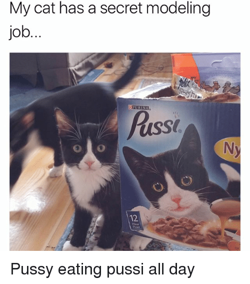 Memes, Pussy, and 🤖: My cat has a secret modeling  job  PURINA  Puss  12  Pasar  Op Pussy eating pussi all day