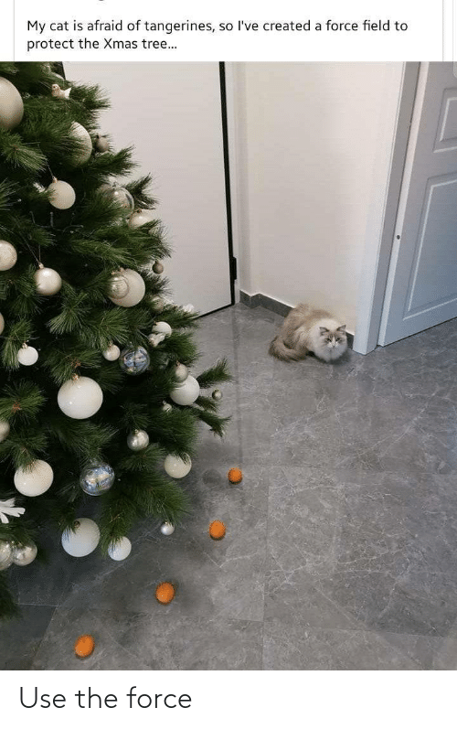 Tree, Cat, and Force: My cat is afraid of tangerines, so l've created a force field to  protect the Xmas tree... Use the force