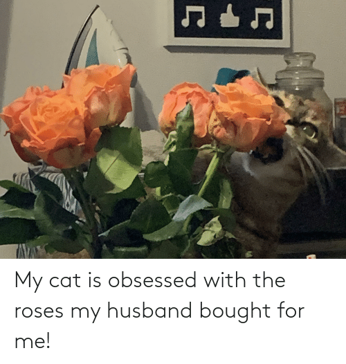 My Cat Is Obsessed With the Roses My Husband Bought for Me